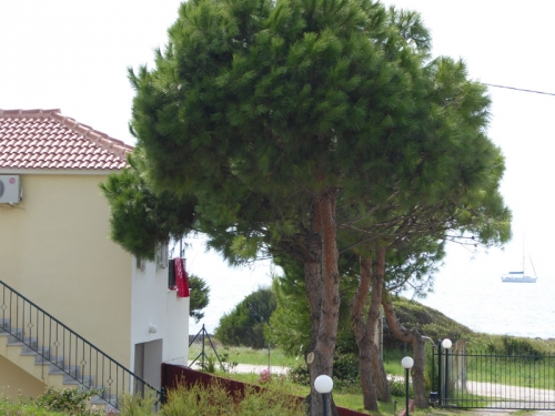 Property villa / house romanos plage premiere ligne mer