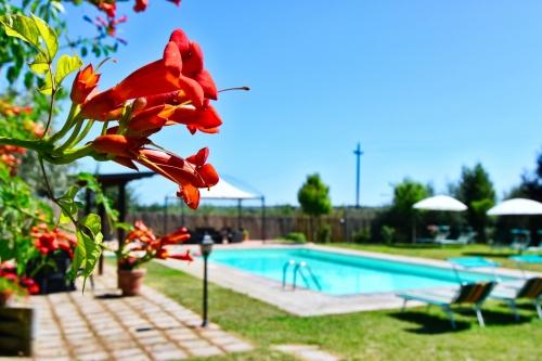 Rental villa / house il castelo