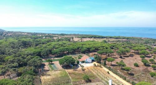 Portugal : PLL823 - Kintala