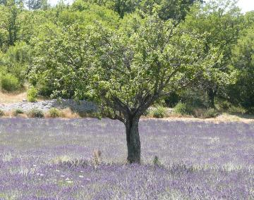 Provence villor